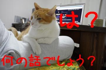 4_20110324213313.jpg