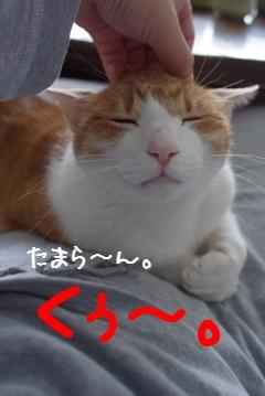 4_20110327231234.jpg