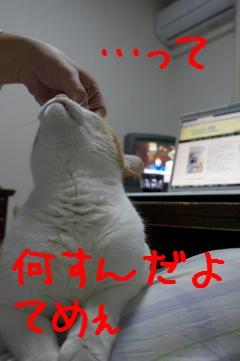 4_20110405194033.jpg