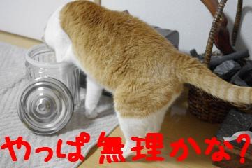 4_20110410185744.jpg