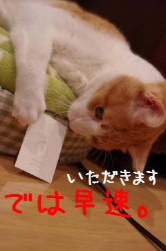4_20110508175017.jpg