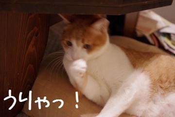 5_20100129211735.jpg