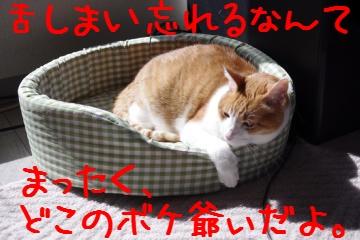 5_20100314102036.jpg