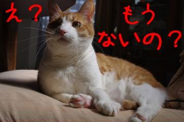 5_20100515224012.jpg