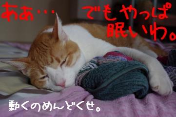 5_20100704145815.jpg