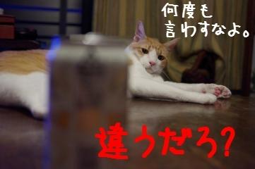 5_20100801213900.jpg