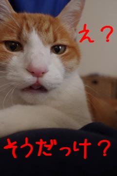 5_20101218080141.jpg