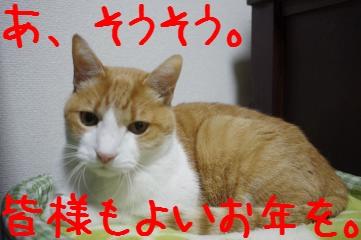 5_20101231180719.jpg
