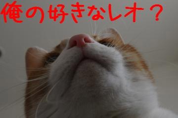 5_20110206094359.jpg