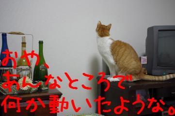 5_20110323210332.jpg