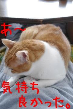 5_20110327231234.jpg