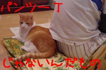 5_20110507140032.jpg