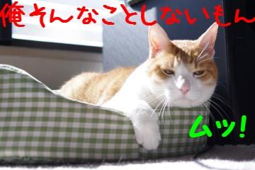 6_20100314102036.jpg