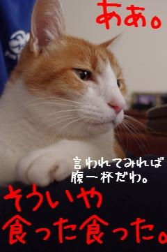 6_20101218080141.jpg