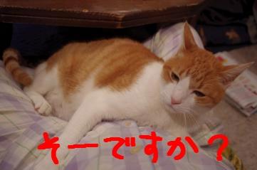 6_20110224214038.jpg