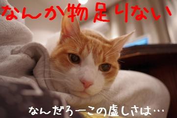 6_20110228215644.jpg