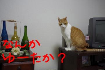 6_20110323210332.jpg