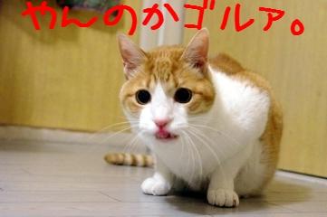 7_20100418204702.jpg