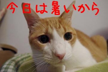 7_20100929210435.jpg