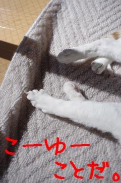 7_20110306115444.jpg