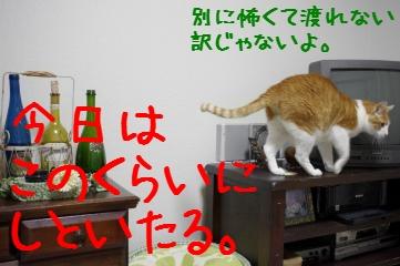 7_20110323210258.jpg