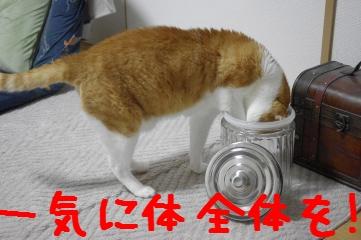7_20110410185744.jpg