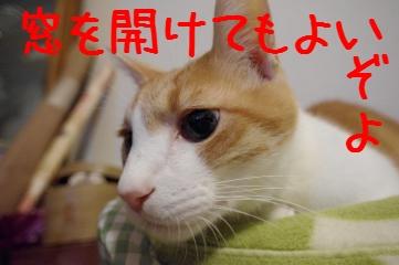 8_20100929210435.jpg
