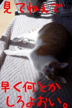 8_20110306115444.jpg