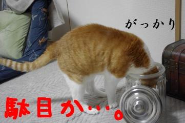 8_20110410185744.jpg