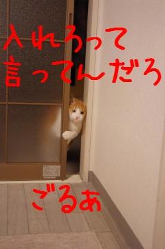 9_20100329213223.jpg