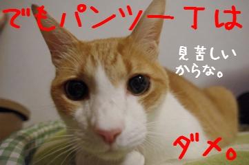 9_20100929210435.jpg