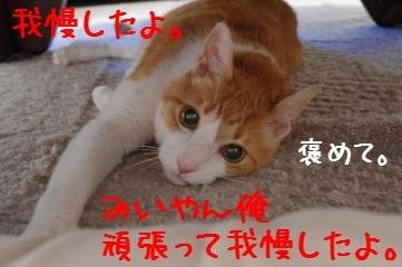 RES04591.jpg