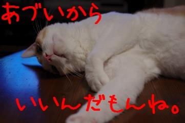 RES04789.jpg