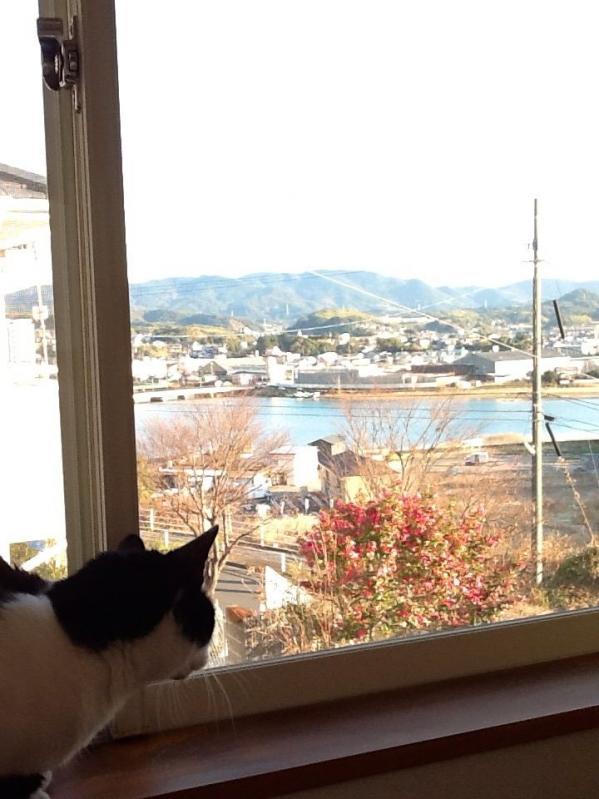 猫がみる街