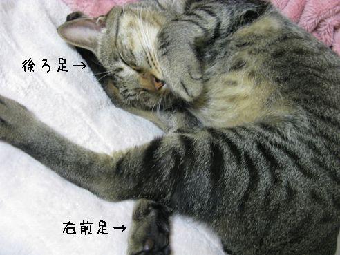 IMG_寝相がヘン2