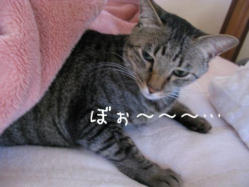 IMG_寝起きのミー