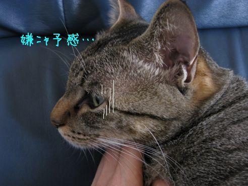 IMG_ミーの横顔