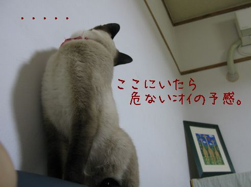 IMG_オイオイw
