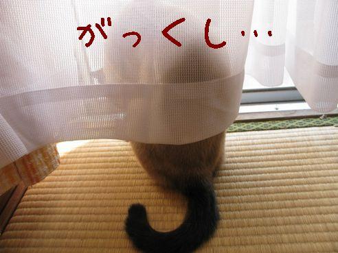 IMG_出してぇ!