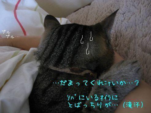 IMG_ピ~ンチw