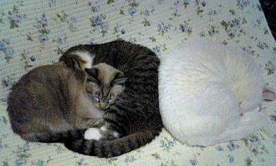3猫111001_204056