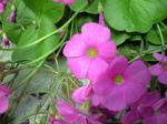 町で見かけた花シリーズhana09292