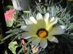 町で見かけた花シリーズhana09301
