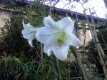 町で見かけた花シリーズhana09304