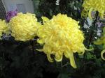 町で見かけた花シリーズhana09306