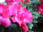 町で見かけた花シリーズhana09345