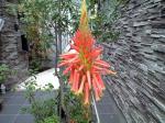 町で見かけた花シリーズhana09348