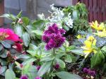 町で見かけた花シリーズhana09349