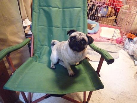 あんずと椅子