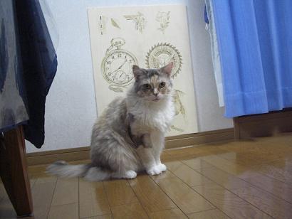 美人ミーコ